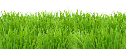 Green grass lawn isolated on white background Royalty Free Stock Photography