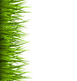 Green grass lawn isolated on white. Floral eco nature Stock Images