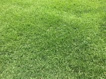 Green grass and lawn Royalty Free Stock Images