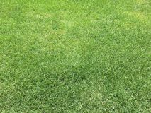 Green grass and lawn Stock Photo
