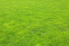 Green grass. Lawn with new green grass after rain Royalty Free Stock Photos