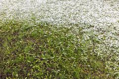 Green grass lawn partially covered by first snow Royalty Free Stock Images
