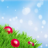 Green grass lawn with red daisy flowers Royalty Free Stock Photo