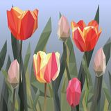 Green grass lawn with red and yellow tulips isolated on white. Floral nature flower background. Triangle Stock Images