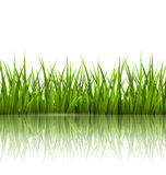 Green grass lawn with reflection on white. Floral nature spring Stock Photos