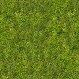 Green Grass on the Lawn. Royalty Free Stock Photos