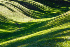 Green grass lawn with shadows. Royalty Free Stock Photo