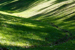 Green grass lawn with shadows. Royalty Free Stock Image