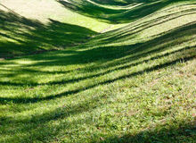 Green grass lawn with shadows. Stock Image