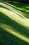 Green grass lawn with shadows. Stock Photo