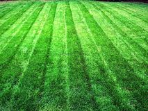 Lawn green grass sod. Green grass lawn sod lawn care royalty free stock images