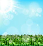 Green grass lawn with sunlight on blue sky. Floral nature spring. Background Royalty Free Stock Image