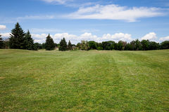 Green grass lawn. At sunny day Stock Photography