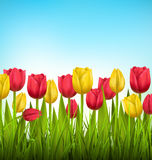 Green grass lawn with tulips on sky. Floral nature flower. Green grass lawn with yellow and red tulips on sky. Floral nature flower background Stock Photography