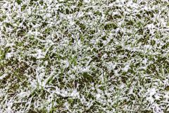 Green grass lawn under snow. autumn background. Stock Image