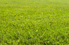 Green grass lawn under sunlight Stock Image