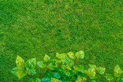Green grass lawn view though plant leafs, natural background royalty free stock photography