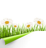 Green grass lawn with white chamomiles and wrapped paper sheet i Stock Photo