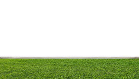 Green grass lawn, with white wall Stock Photo