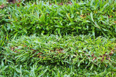 Green grass layer Stock Images