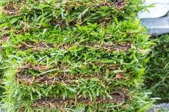 Green grass layer Royalty Free Stock Photos