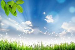Green Grass leaf and bokeh light sun and cloud sky Stock Image