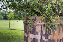 Green grass and leaf plant over wood fence Royalty Free Stock Photo
