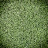 Green grass leaf texture. Background Stock Image