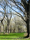 Green grass, leafless trees in Central Park. Bright green grass in blue sky on a sunny day under a lot of leafless trees in Central Park in the heart of New York stock photo