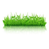 Green Grass With Leafs Royalty Free Stock Photo