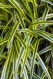 Green grass leaves royalty free stock image