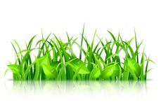 Green Grass and Leaves. Fresh green grass and leaves on white background Stock Photography