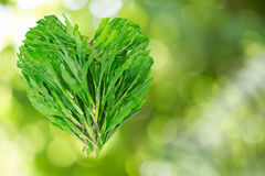 Green grass leaves in heart shaped on blurred bokeh background Royalty Free Stock Photo