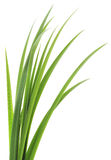 Green grass leaves Stock Image