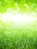 Green grass and leaves Royalty Free Stock Image