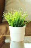 Green grass leaves in pot Royalty Free Stock Image
