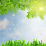 Green grass and leaves at sunny day Royalty Free Stock Photo