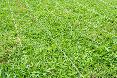 green grass and LED lamp Royalty Free Stock Photo