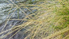 Green grass, light brown background. Water or canal for daytime and street Royalty Free Stock Photography