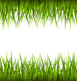 Green grass like frame isolated on white. Floral eco nature Royalty Free Stock Photography