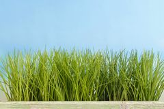Green grass in a line Royalty Free Stock Photos