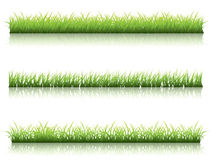 Green grass line Royalty Free Stock Image