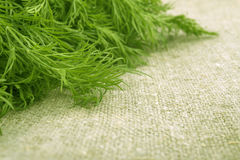 Green grass linen background. Green dill royalty free stock photo