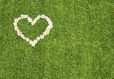 Green grass and daisies heart Royalty Free Stock Photos