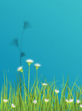 Green grass with little white flower background Royalty Free Stock Image
