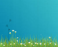 Green grass with little white flower background 3 Stock Photo