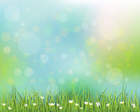 Green grass with little white flower background Stock Images