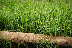 Green Grass with Log Royalty Free Stock Photo