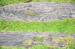 Green grass and log background Stock Image