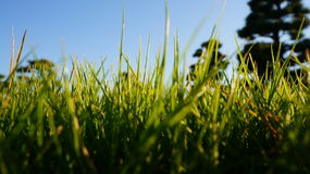 Green grass. Low shot of grass in the Imperial Palace Park in Tokyo, Japan Stock Photos